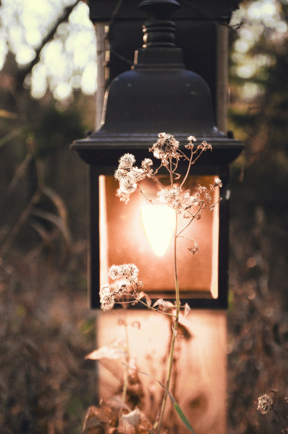 white flowers in front of lamp
