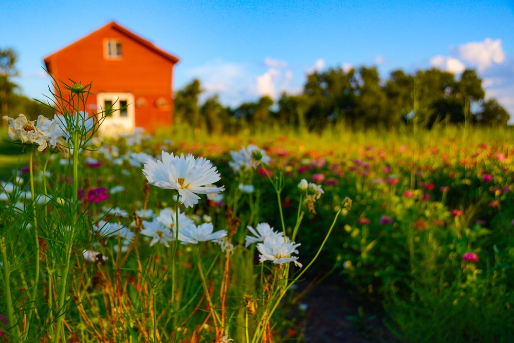 flower field near building during day