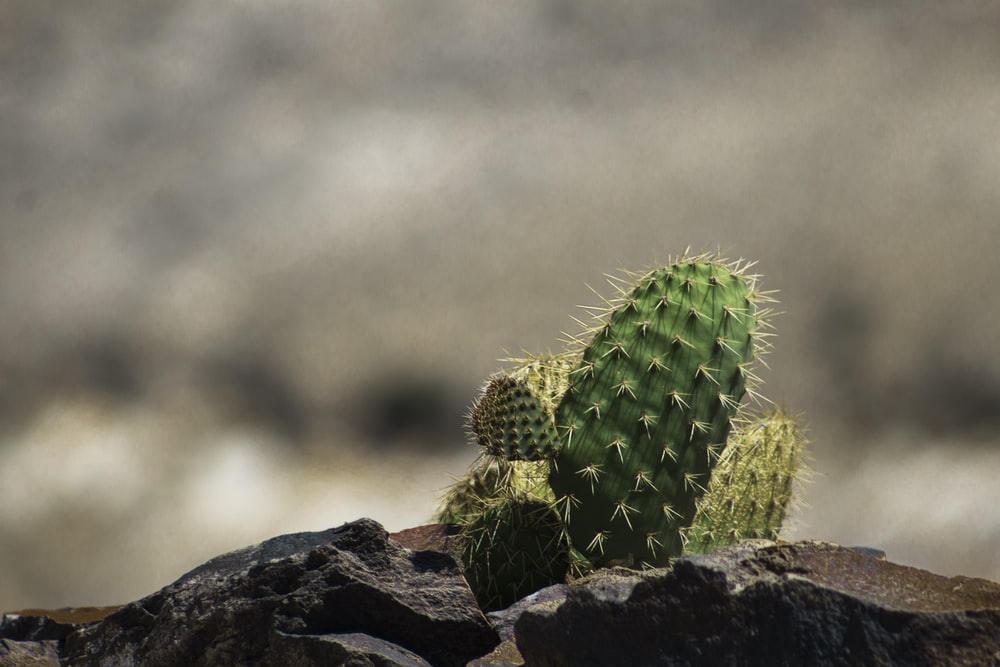 selective focus photography of green cactus