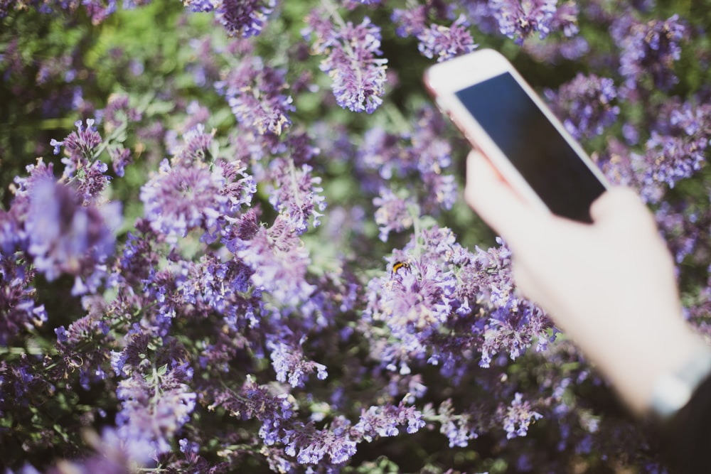 selective focus photography of person using smartphone beside flowers