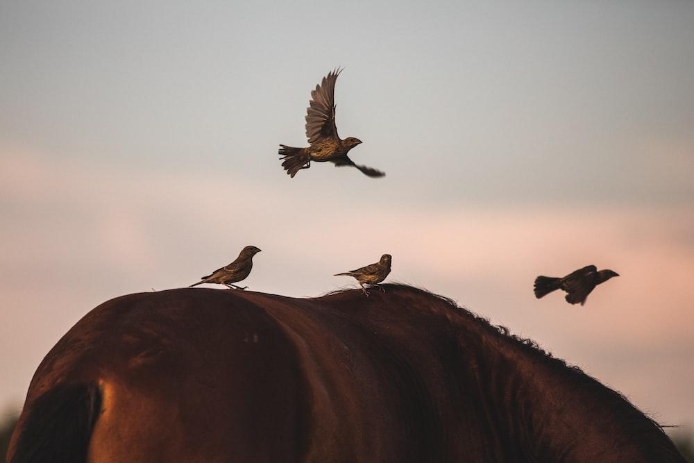 birds on brown animal's back