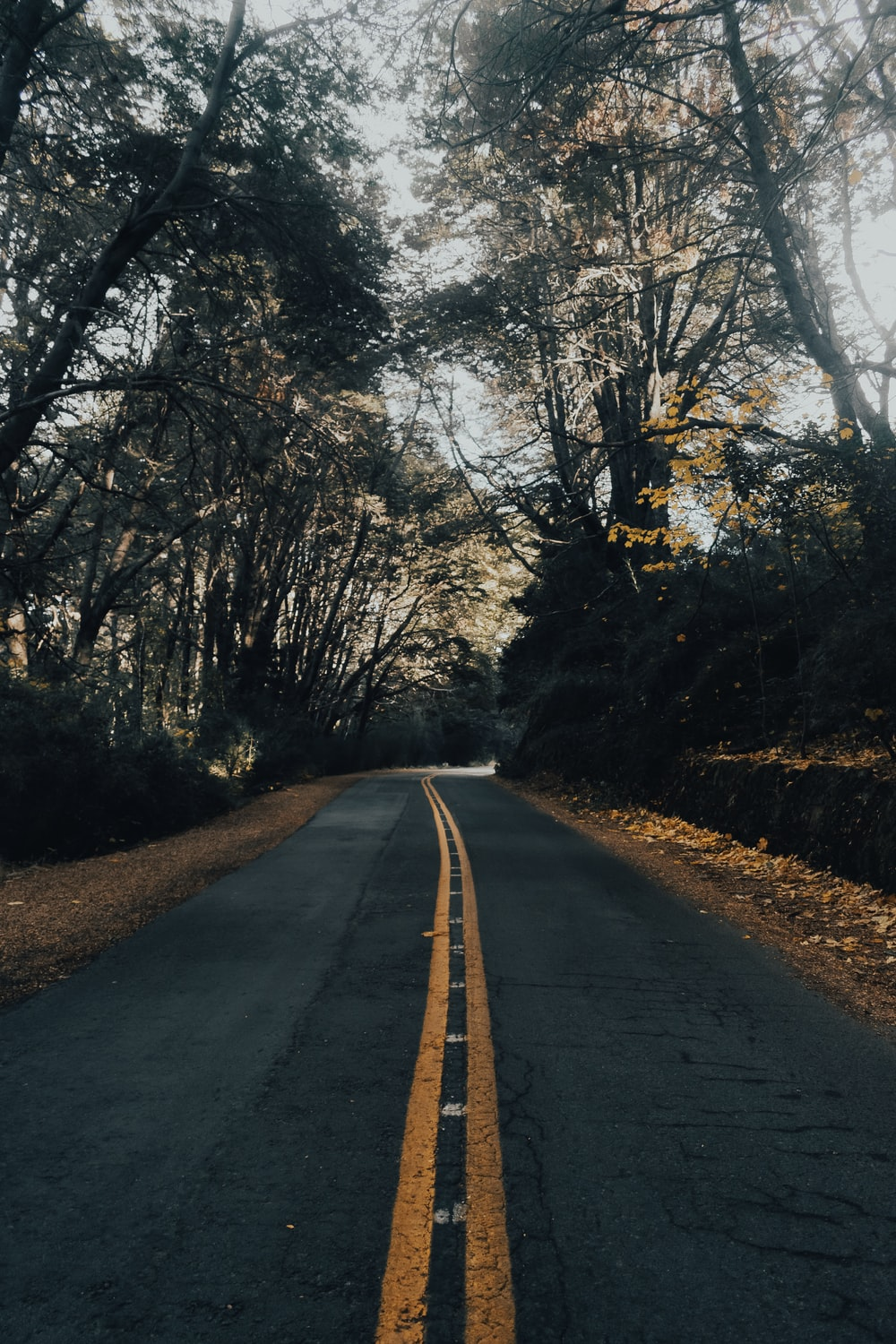 road near trees during day