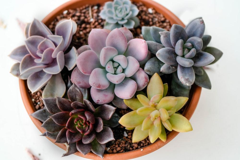 six succulents in pot