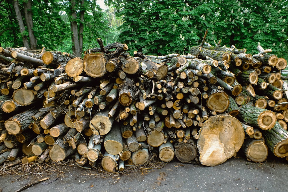 firewood stack surrounded with green trees