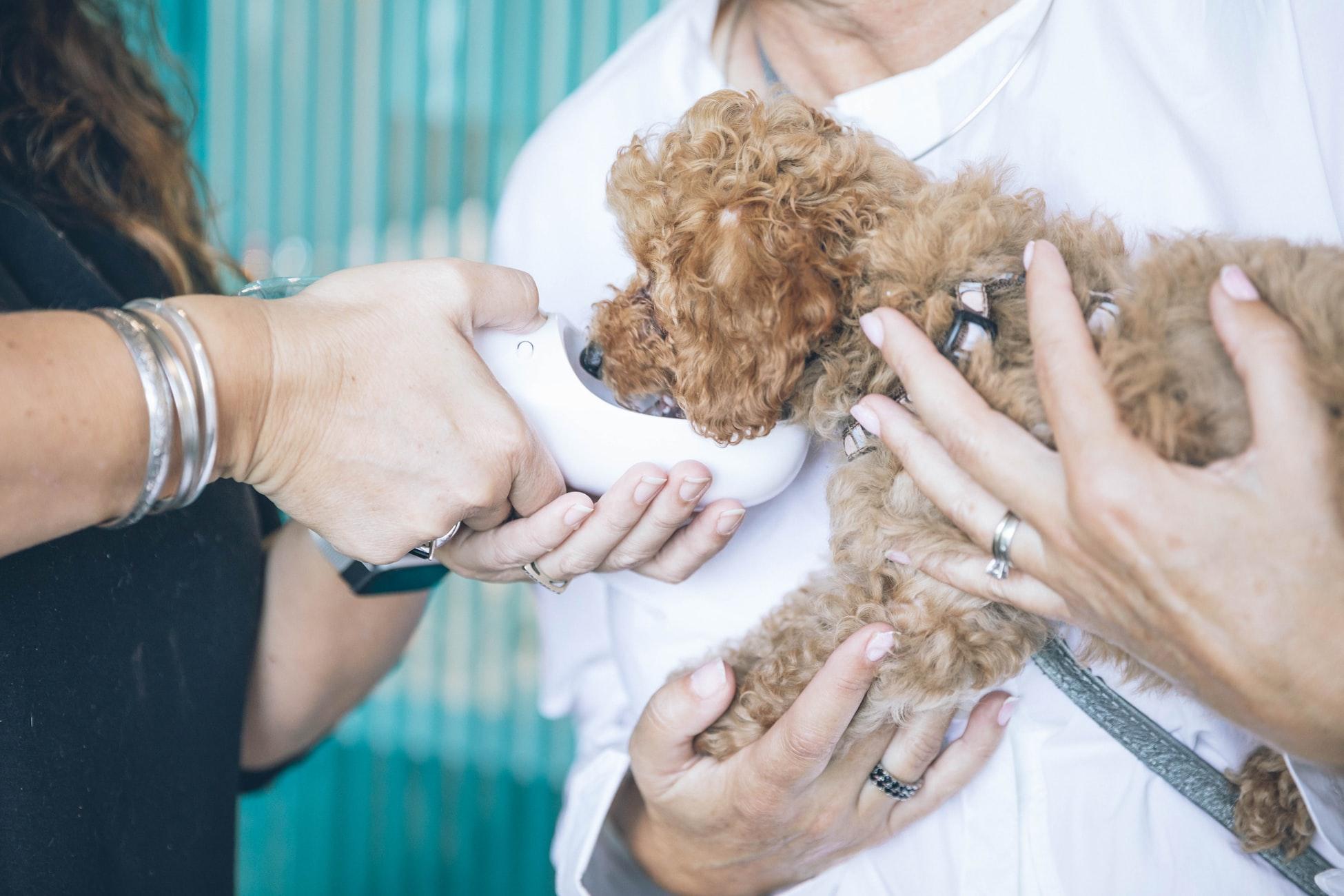 ペット診療のオンライン予約システム