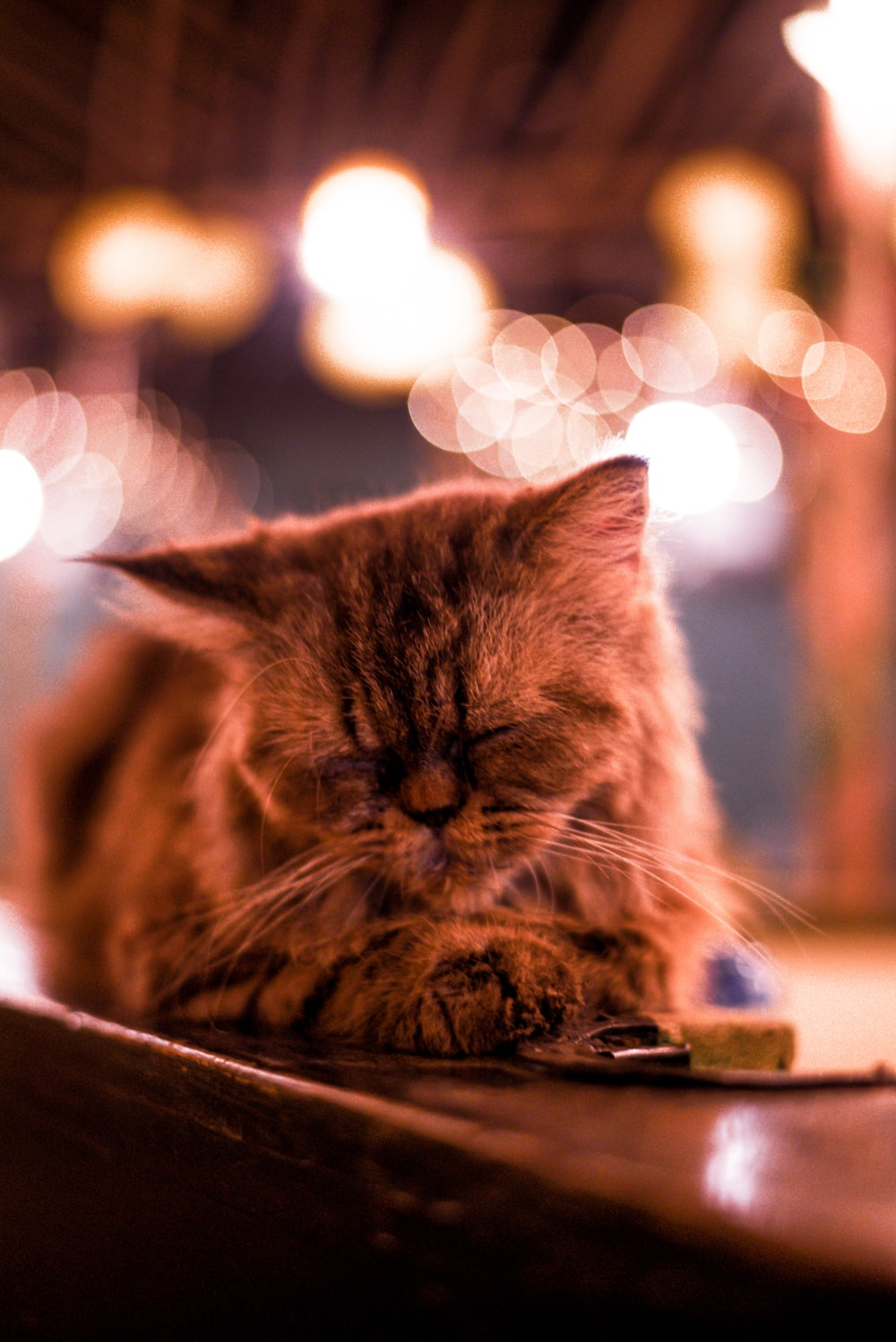 selective focus photography of brown cat lying on brown table