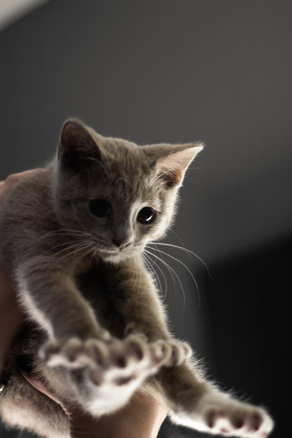 selective focus photography of gray kitten