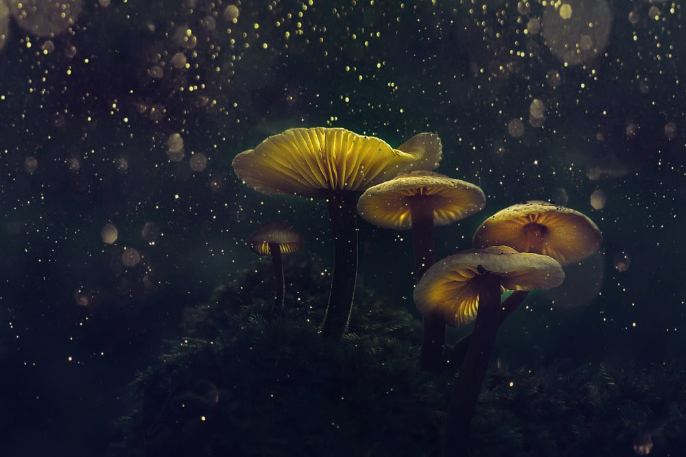 selective focus photography of brown mushrooms at night