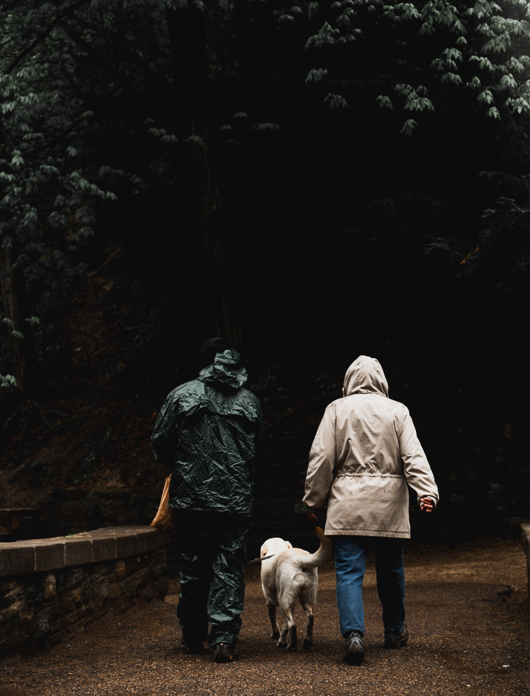 A couple walking their dog on a rainy day.