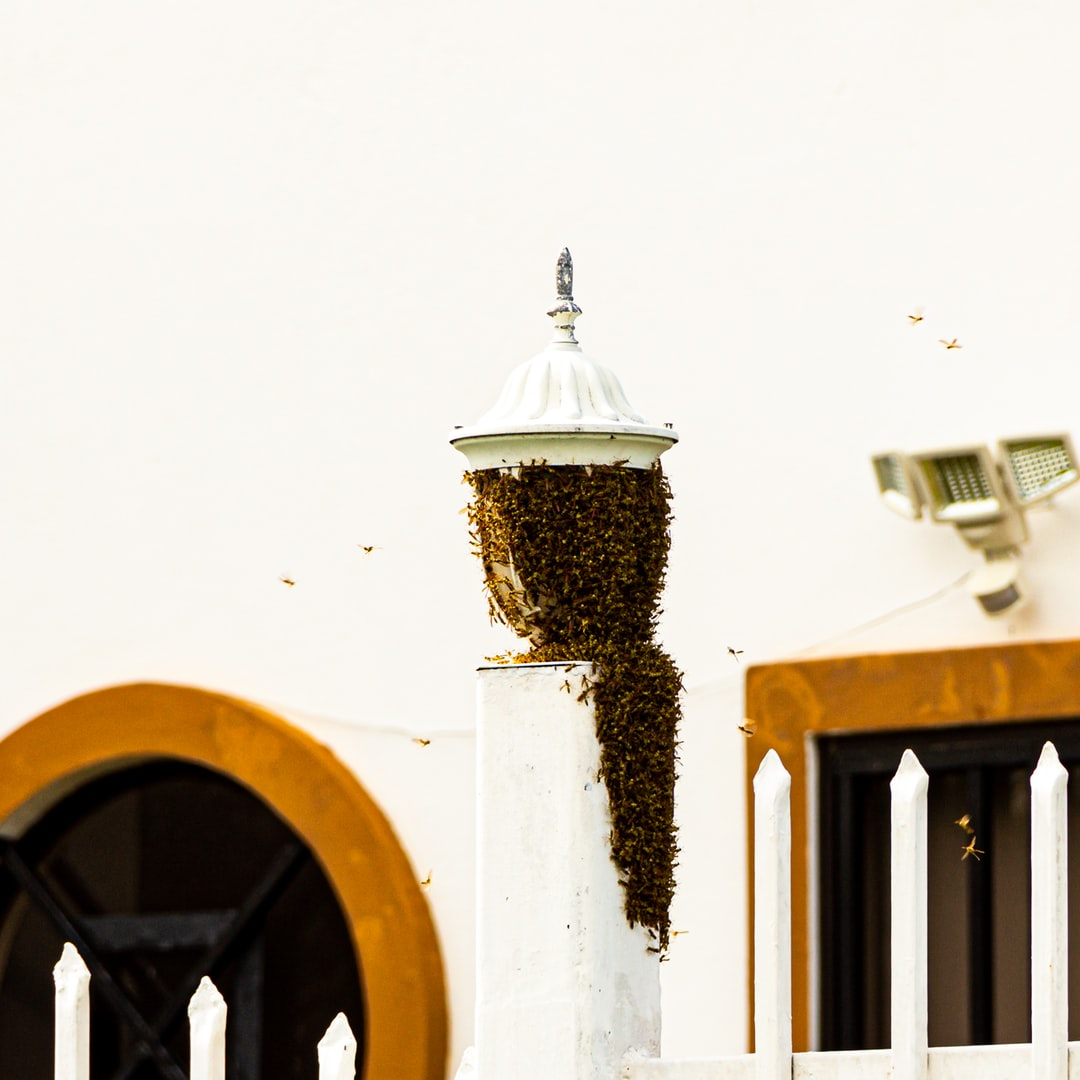 Bees swarmed on gate post.