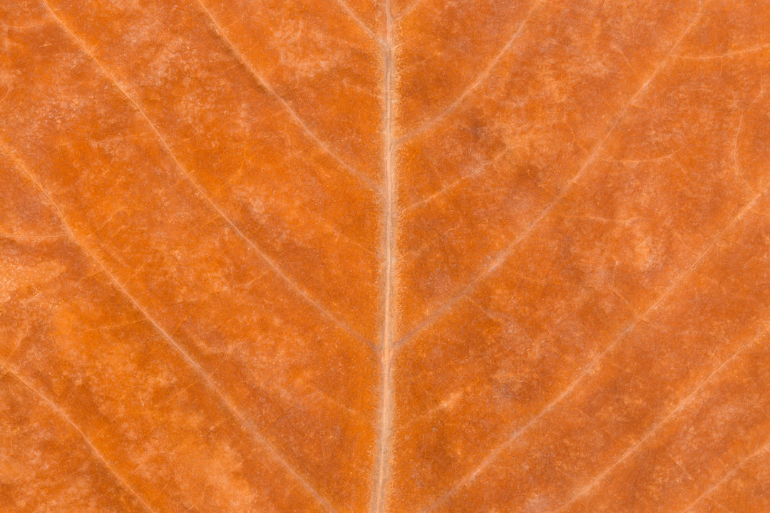 Golden Autumn Leaf Background. Macro Shot of a Golden Autumn Leaf Background.