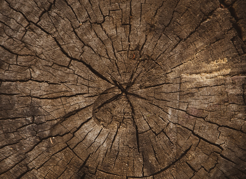 macro photography of brown plank