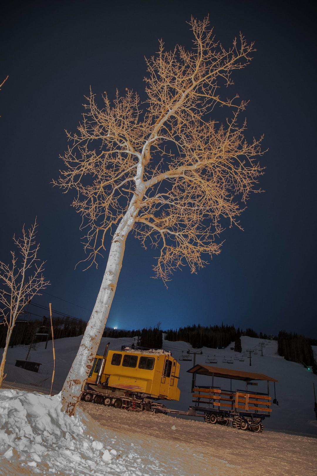 Snowcat under tree at night