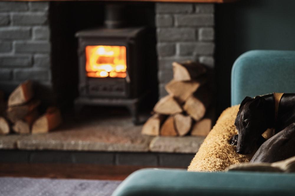 black dog sleeping on blue sofa