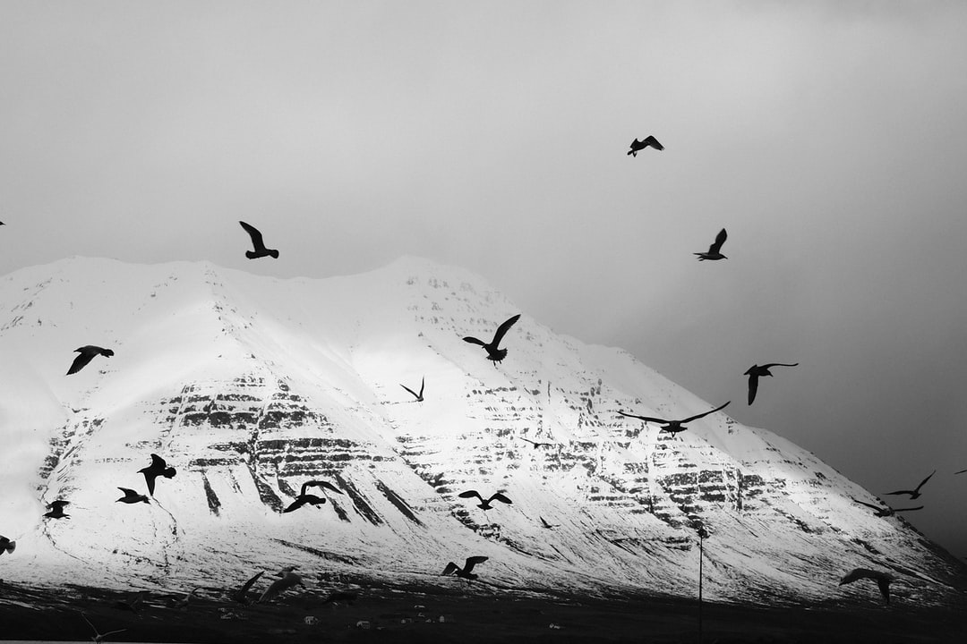 Grayscale Photo of Birds - unsplash