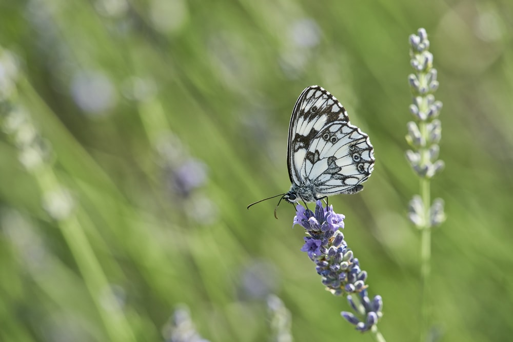 white and black butterfly on flower
