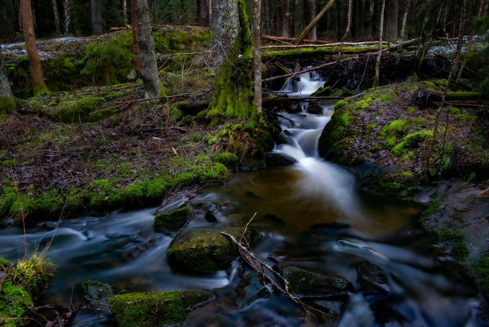river with stone in forest