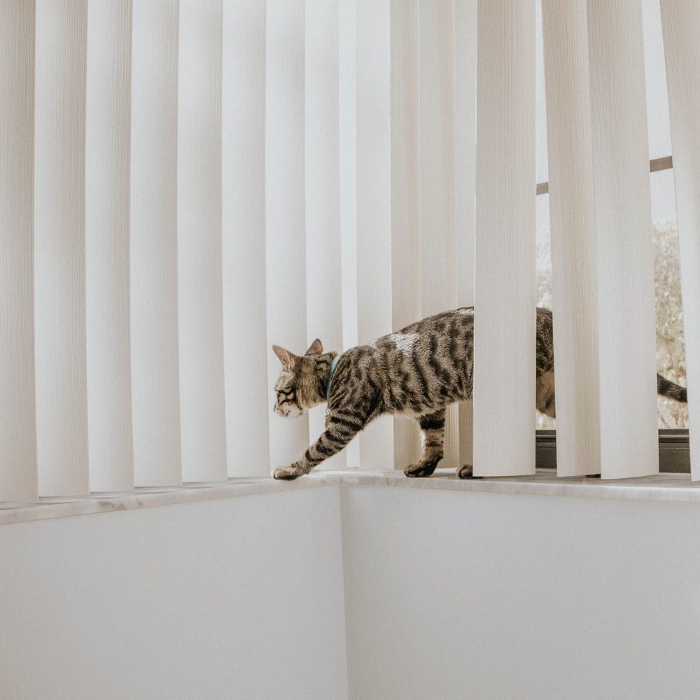 Tabby Cat On Window With Vertical Blinds Photo Free Image On Unsplash