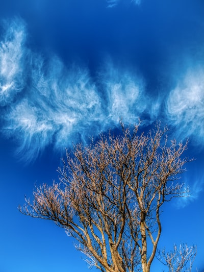 Leafless tree touching the clouds. Socuéllamos, Spain