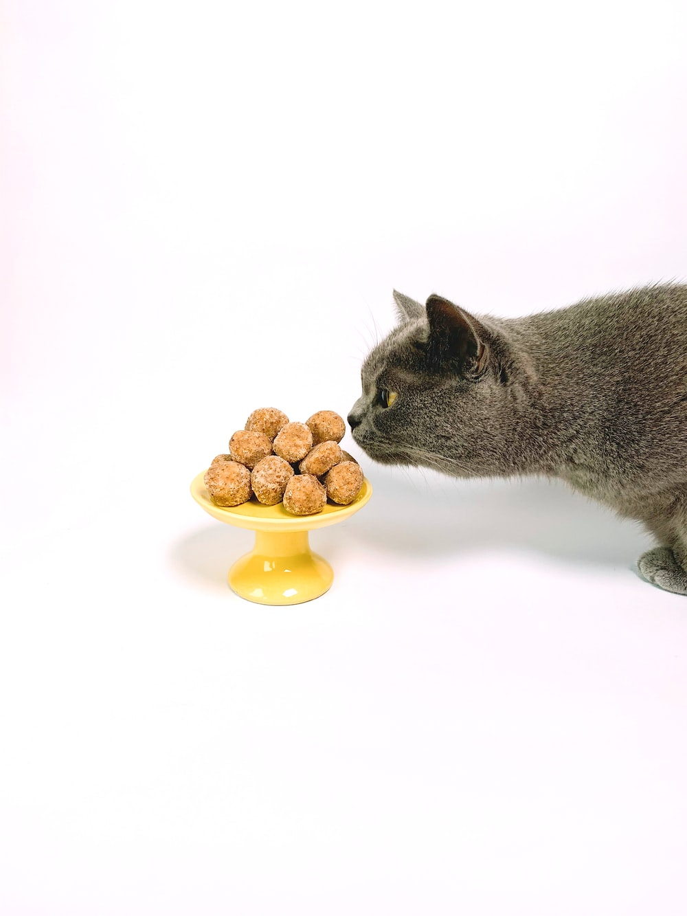 short-fur gray cat smelling sweets