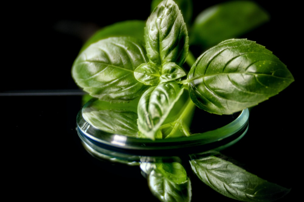 macro photography of green mint herb