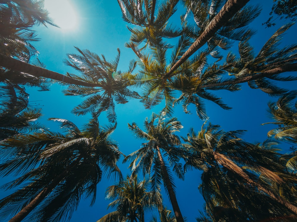 low-angle photography of palm trees during daytime