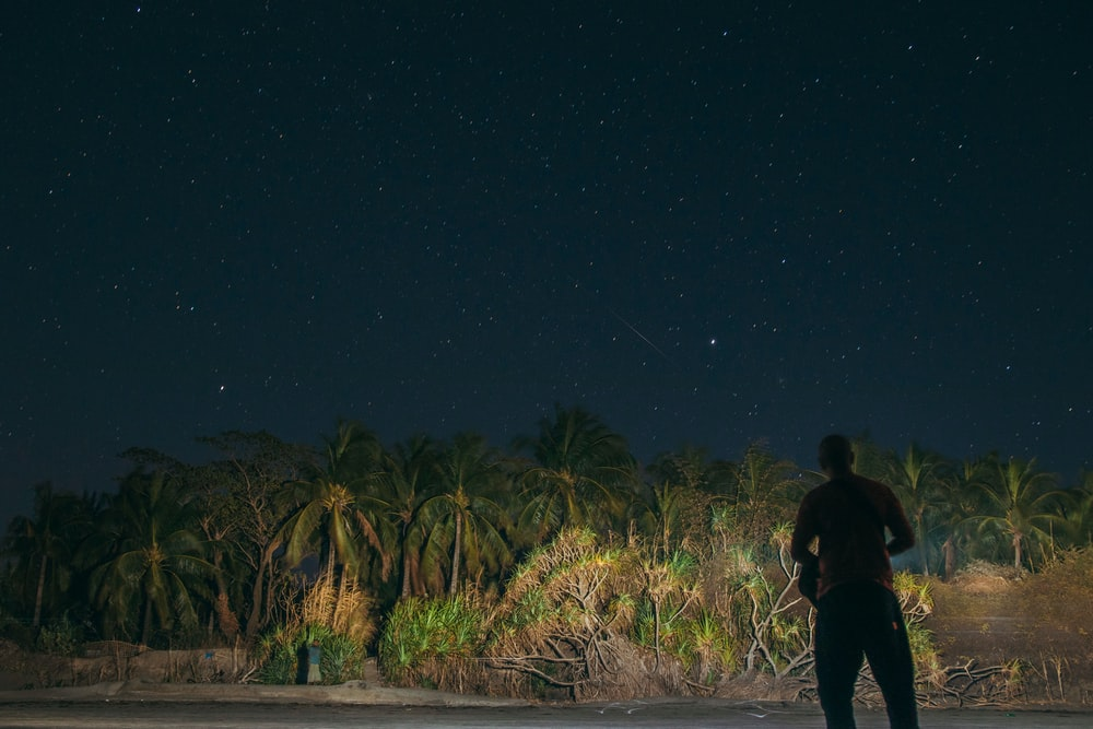 silhouette of man standing in front of green trees at night
