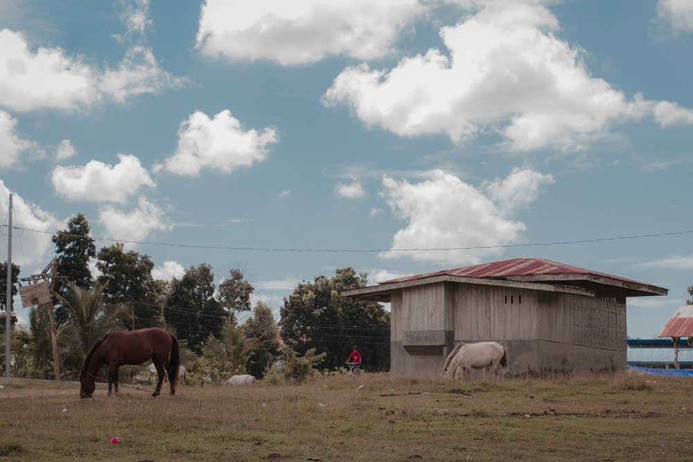 two horses outside a house during daytime