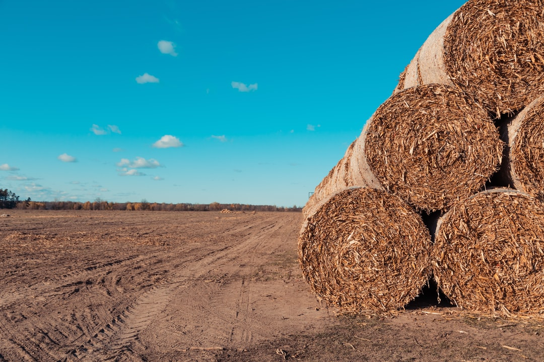 Huge straw pile of Hay roll bales on among harvested field against a blue sky