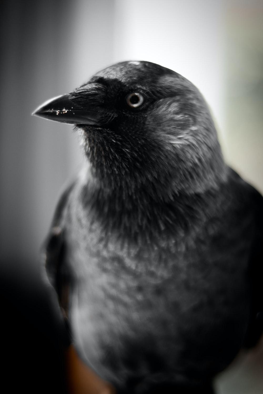 close up photography of bird