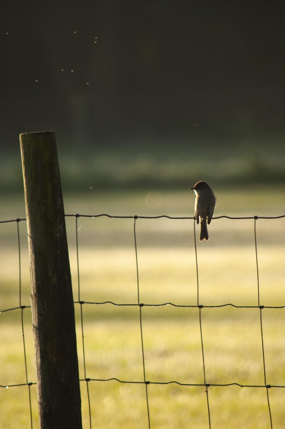 black bird on fence