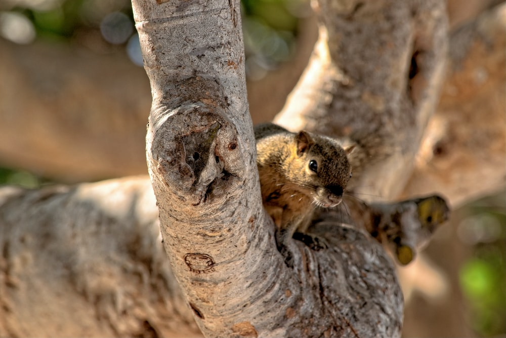 shallow focus photo of brown animal on tree branch