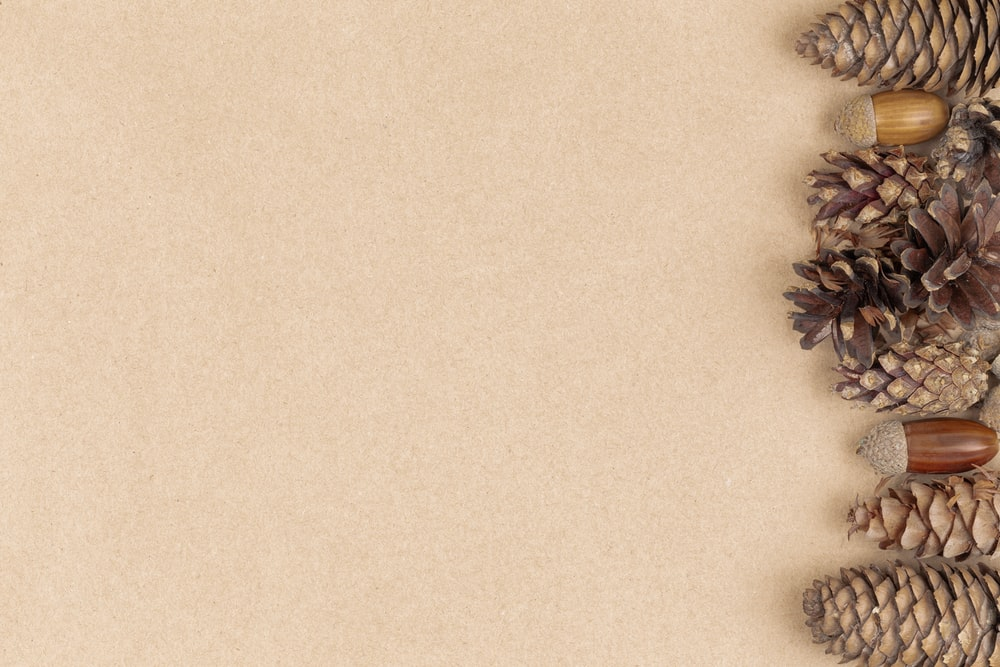 minimalist photography of brown pine cones and acorns in brown background