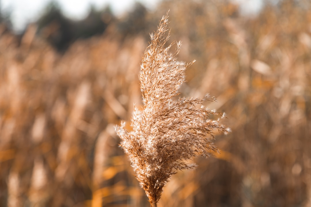 Dry branch of a plant on a yellow field background. Place for your text