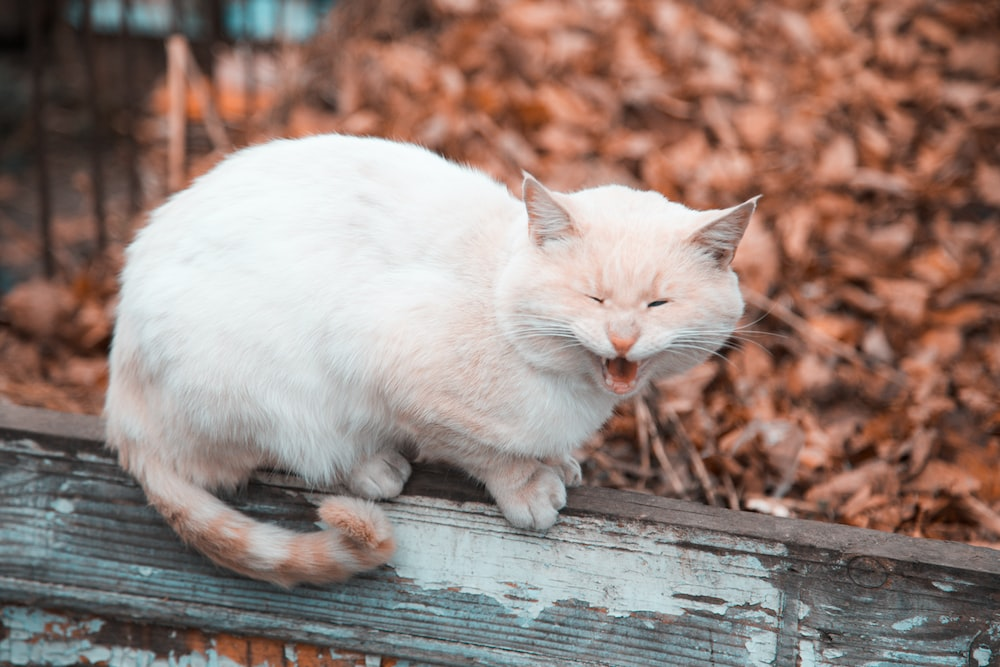 white cat on fence