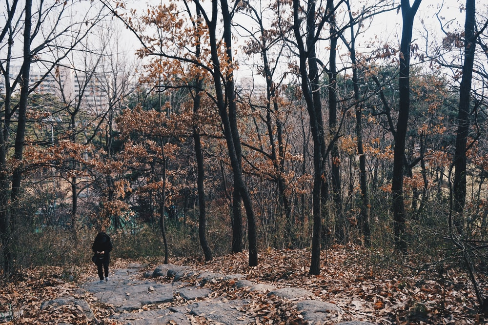 person walking surrounded with brown trees viewing high-rise buildings during daytime