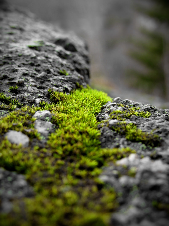 Green moss on rock.