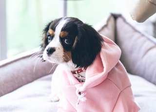 dog in pink jacket