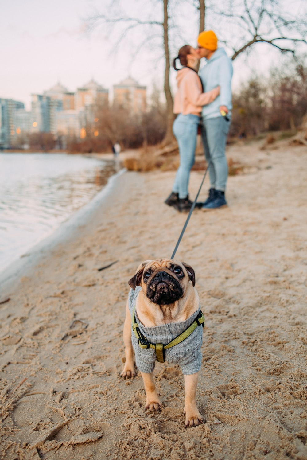 man and woman standing while kissing on lips near pawn pug
