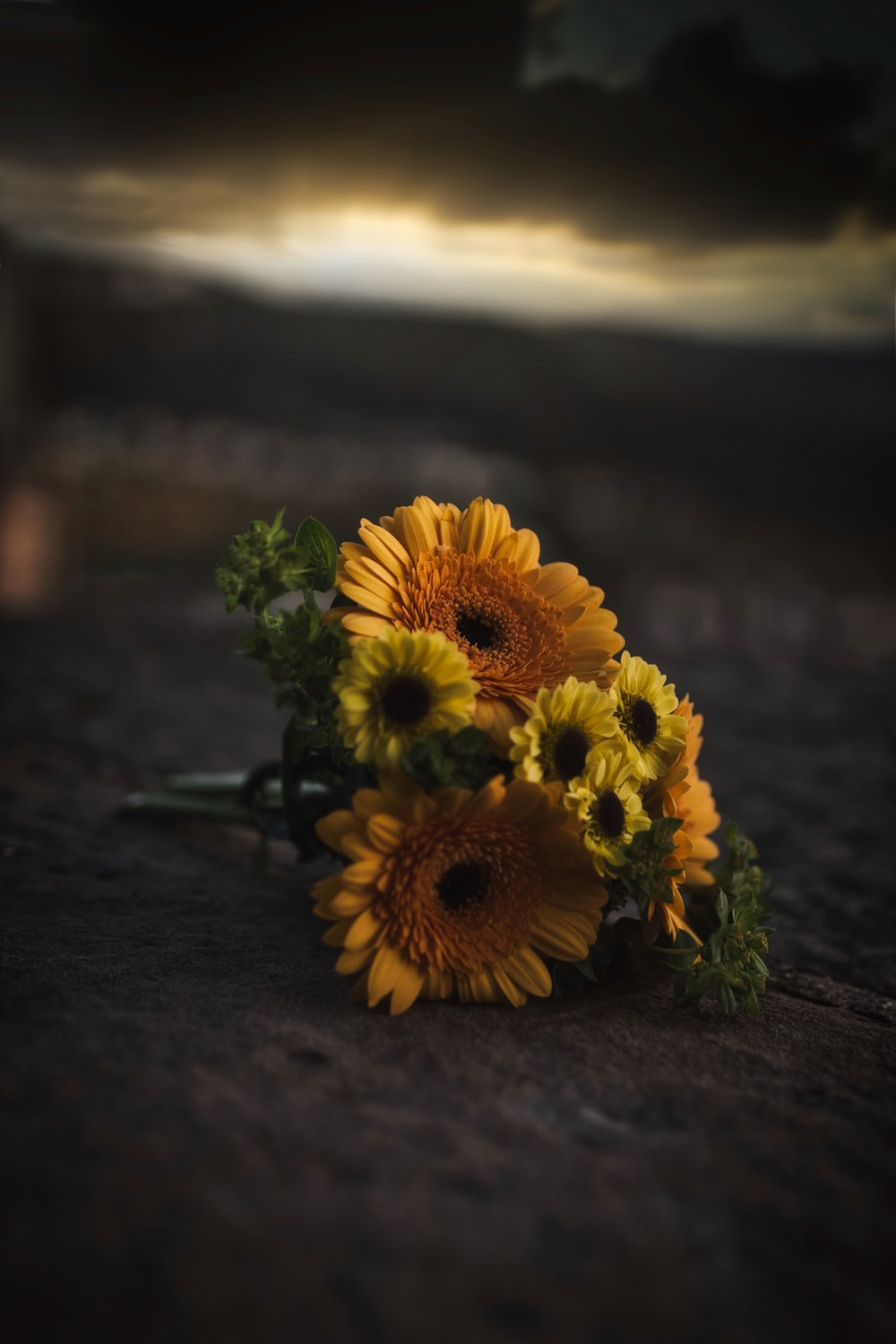 shallow focus photo of yellow flowers