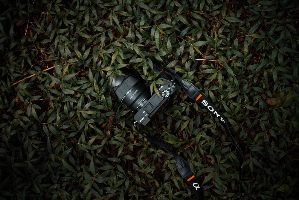 black Sony DSLR camera on grass