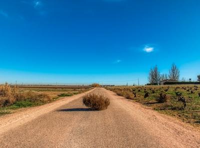 Tumbleweed in a road. Socuéllamos. Spain