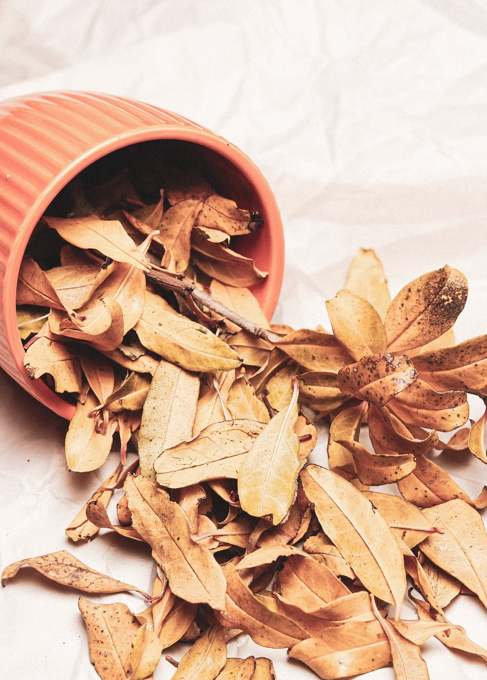 brown leaves on white paper and in tipped orange pot