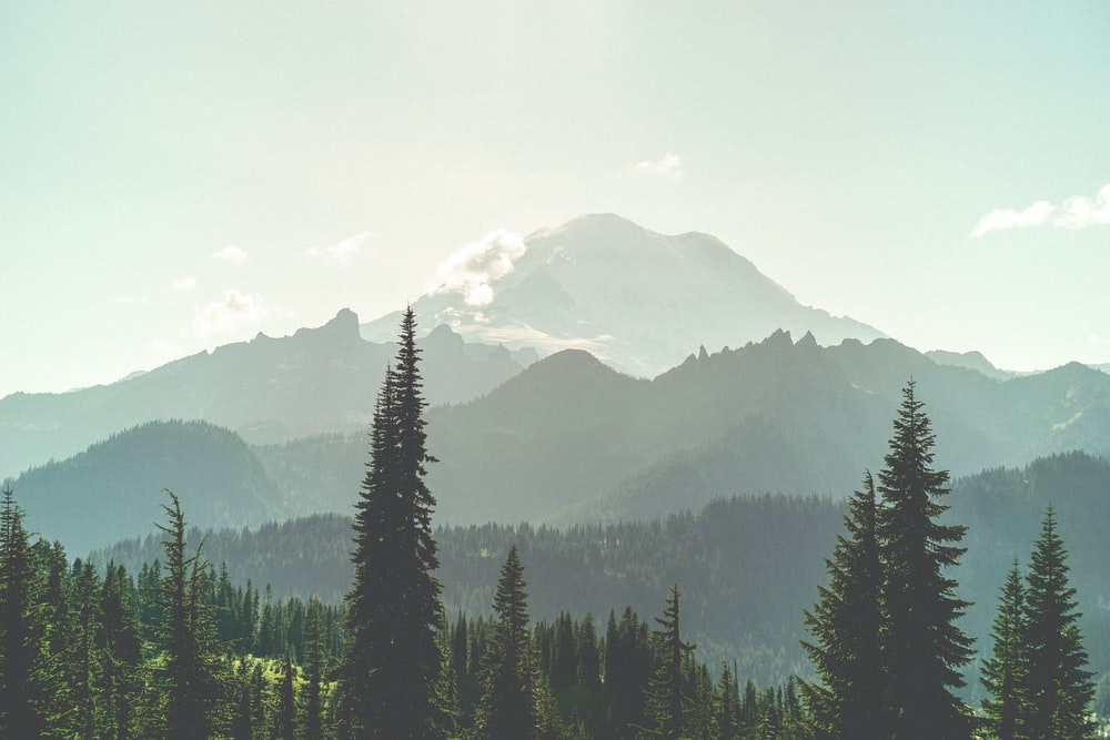 green trees near mountains during daytime