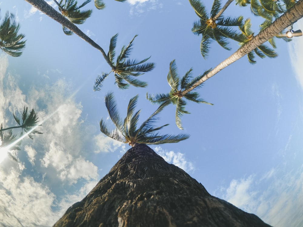 low-angle photography of coconut trees under a calm blue sky