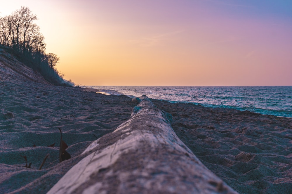 tree log by the seashore during golden hour