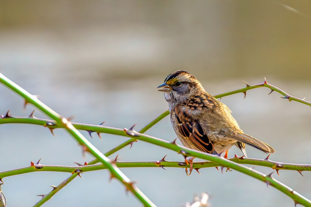 selective focus photography of a brown bird perching on a thorny branch