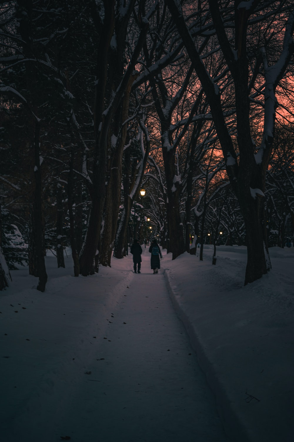 two persons walking along a pathway between inline trees