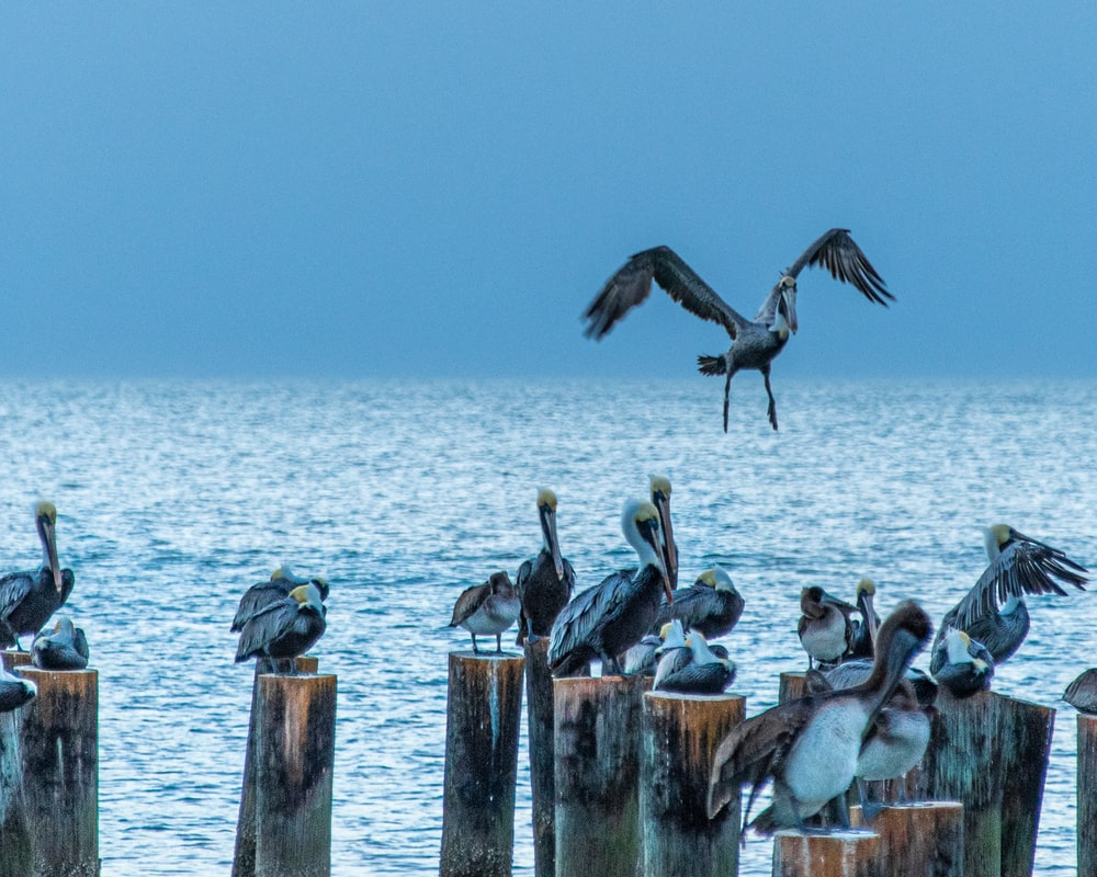 gray birds on wooden posts in sea