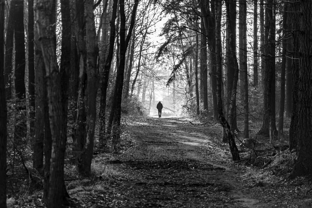 man walking on dirt road near trees during day